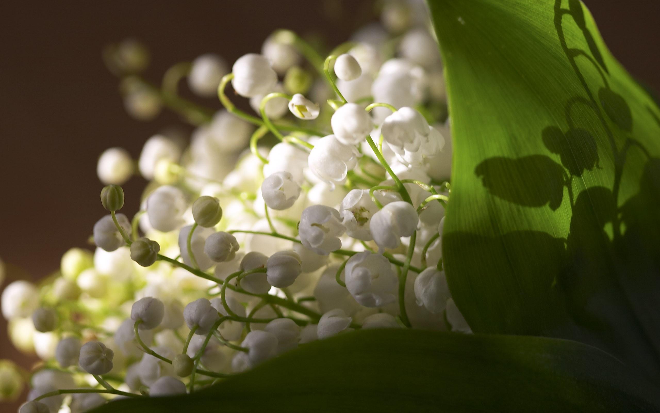 foto de wallpaper fleurs de printemps:: Fond Ecran HD