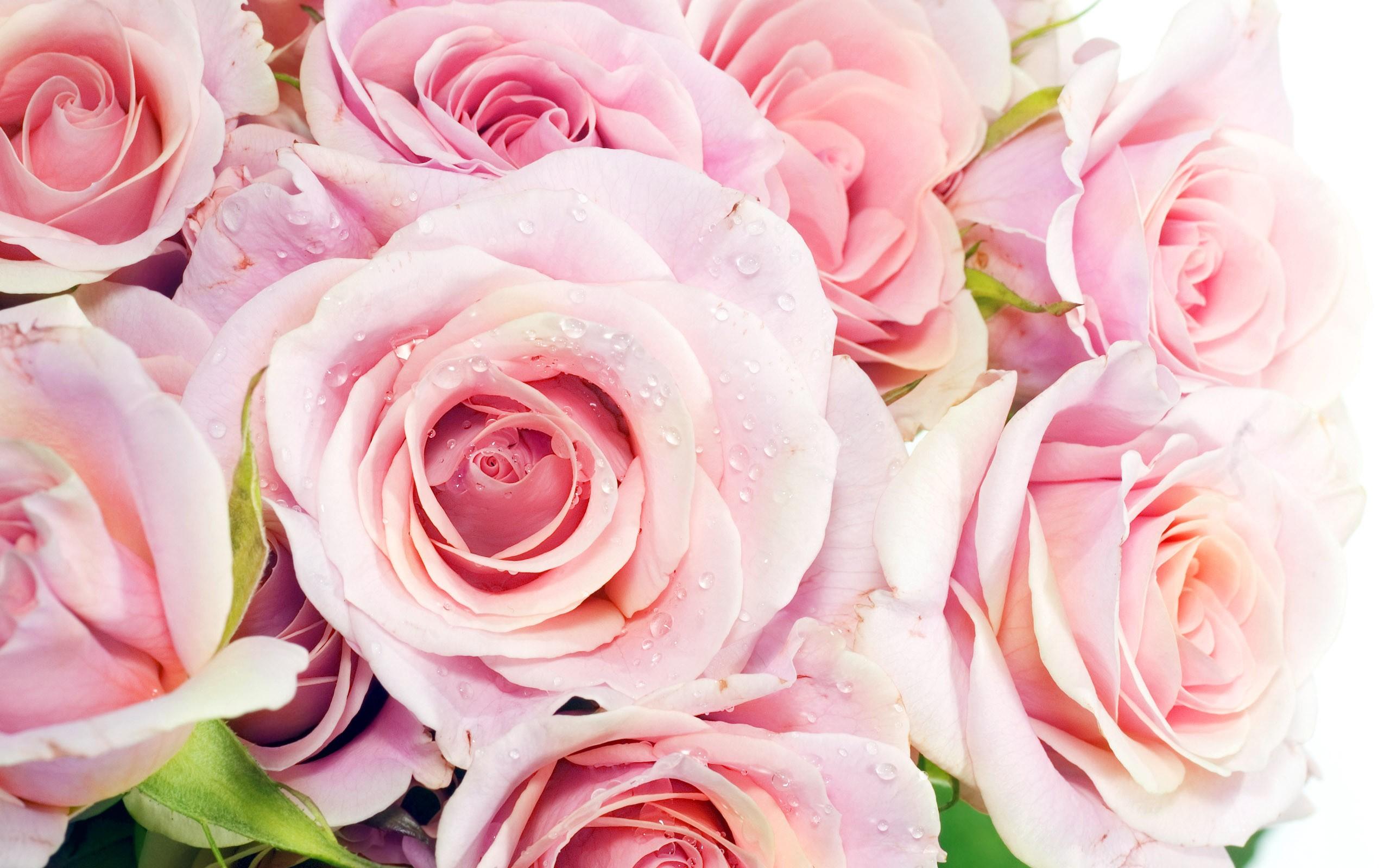 Fleur He Plumeria Fond Ecran Hd