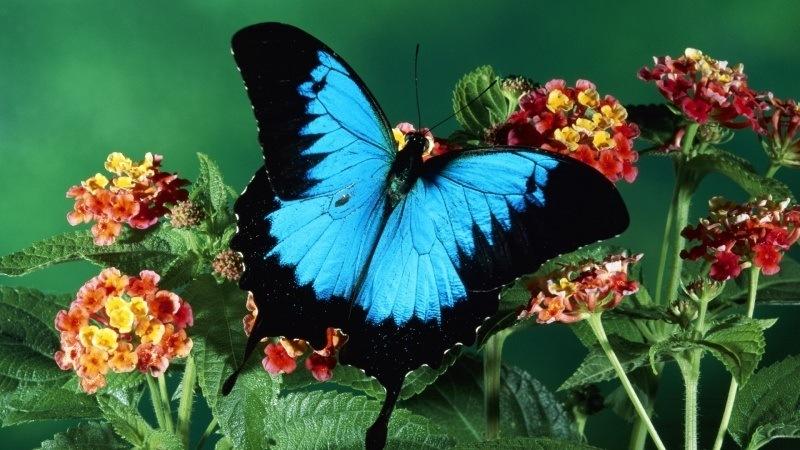 Papillon Fond Ecran Hd