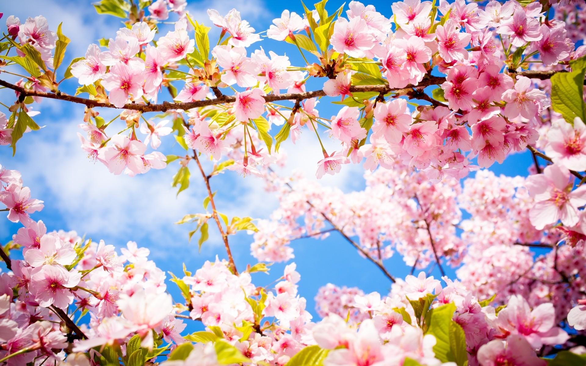 Wallpaper Fleurs De Printemps Fond Ecran Hd