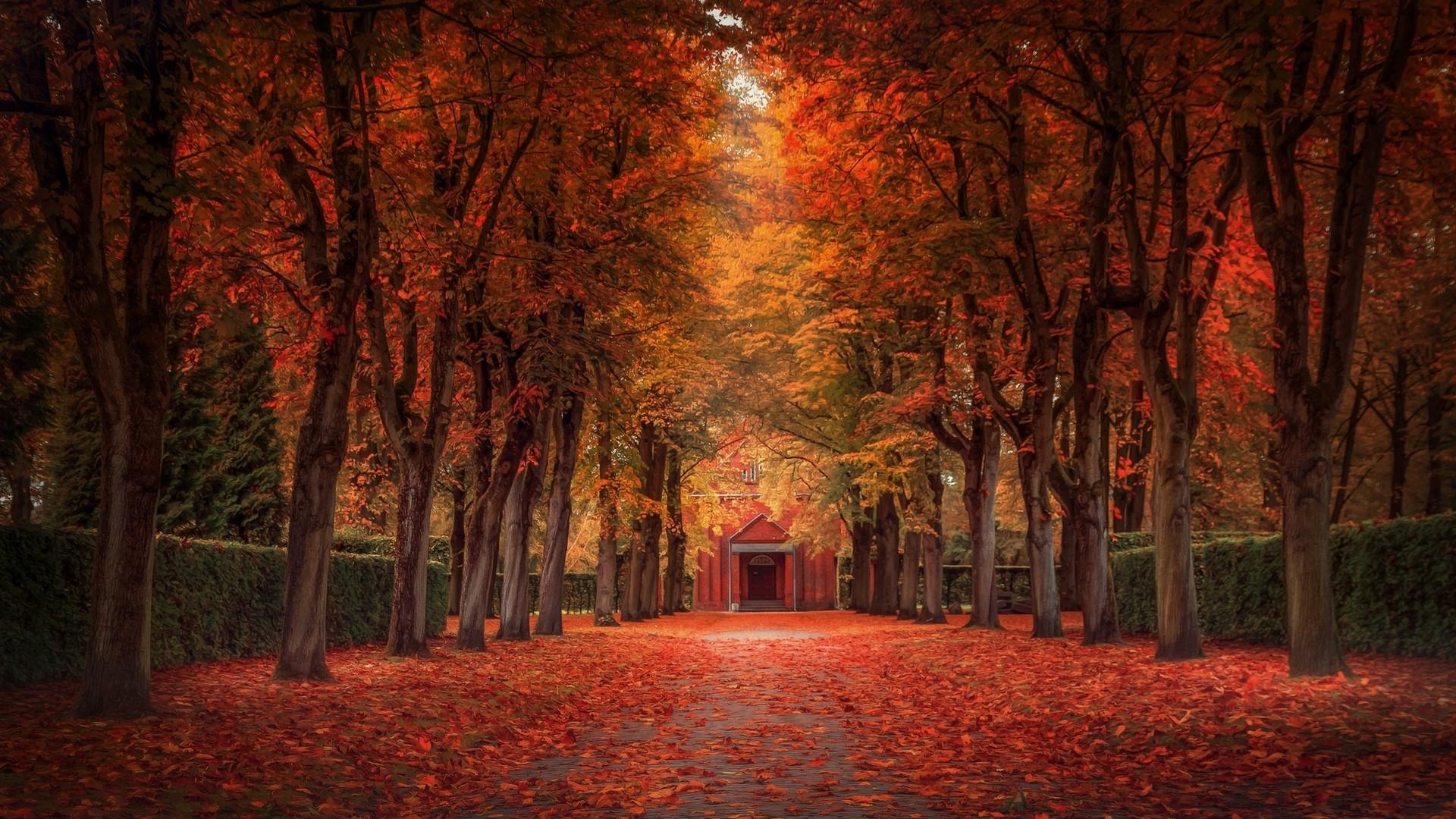 Feuilles Sous Bois Foret A L Automne Photo Fond Ecran Hd