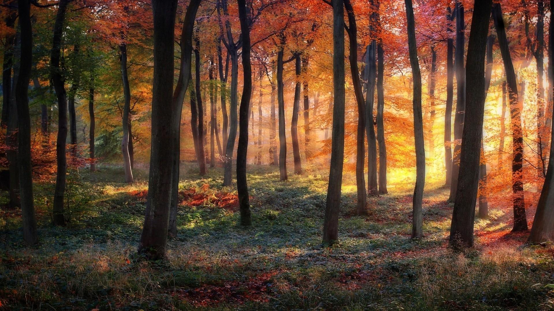 foto de feuilles sous bois forêt à l'automne photo:: Fond Ecran HD