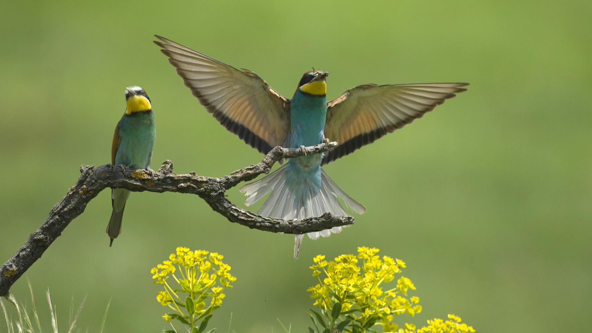 Perruche Ondulee Photo Oiseau Fond Ecran Hd