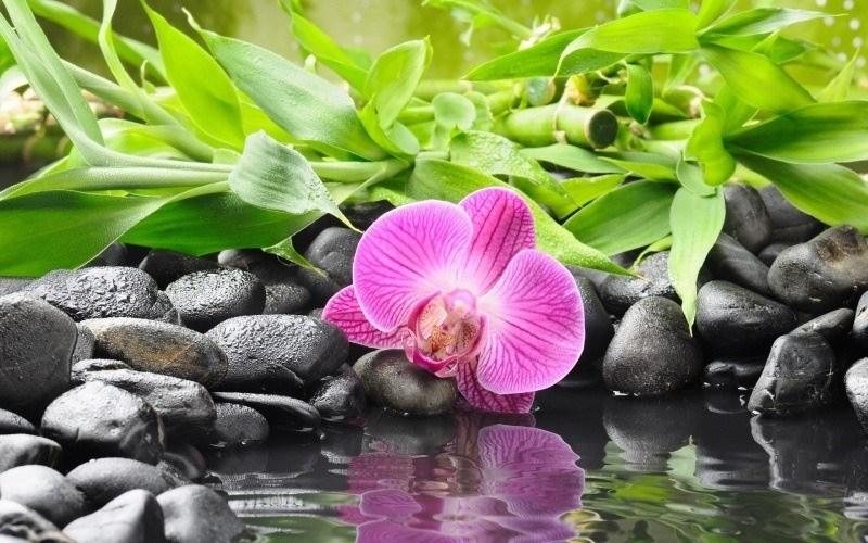 Fleurs Fond Ecran Hd