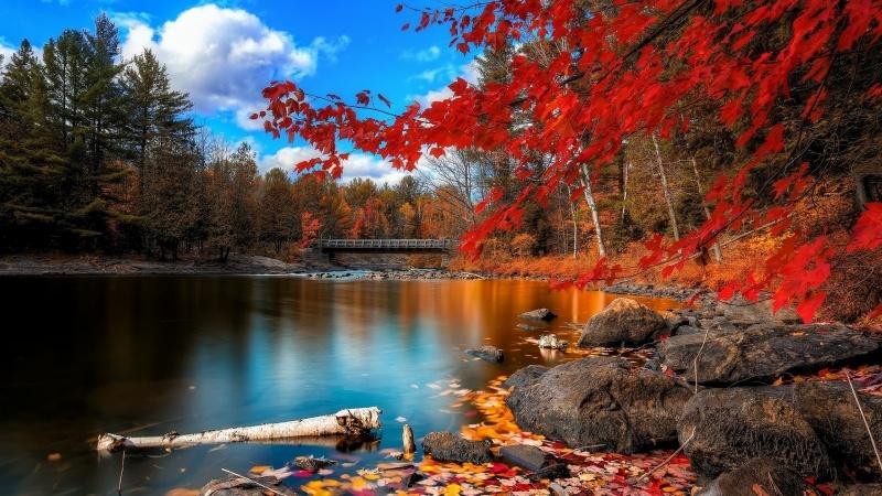 foto de photo automne rivière forêt et érable rouge:: Fond Ecran HD