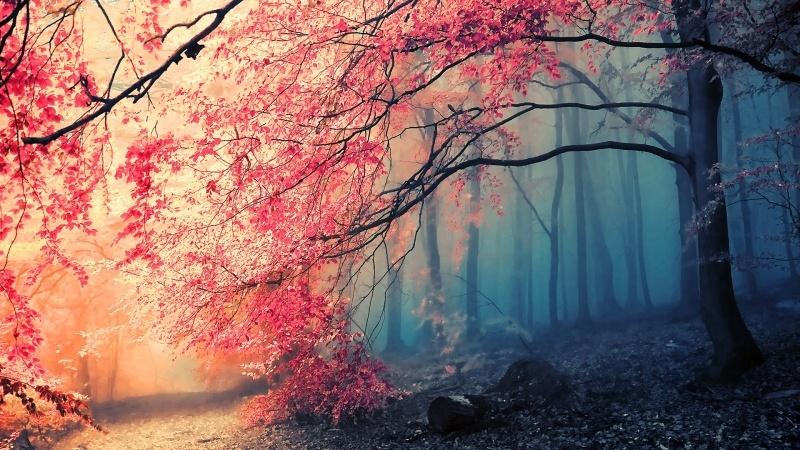 foto de chemin de forêt à l'automne photo:: Fond Ecran HD