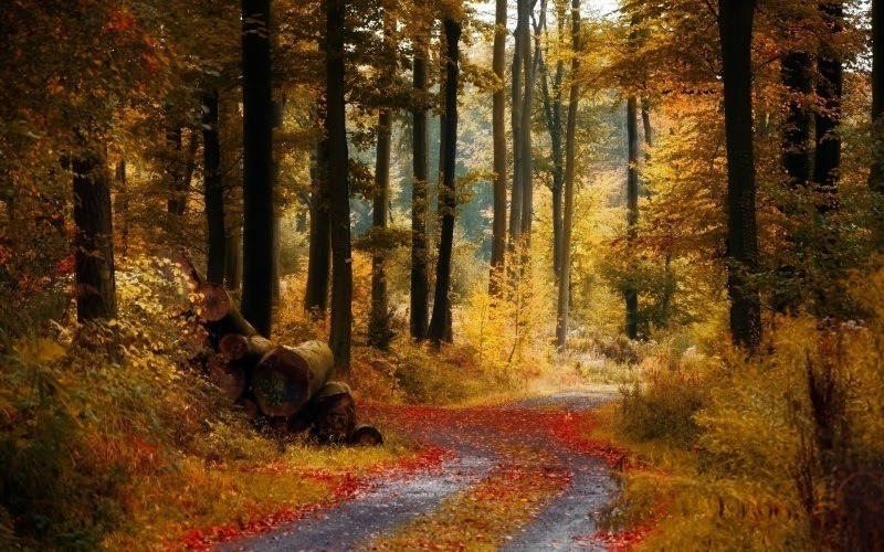 chemin for�t automne photo