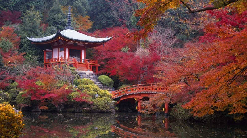 Jardin Japonais Et Pont A L Automne Fond Ecran Hd