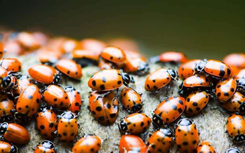 coccinelle rouge et noir image photo wallpaper