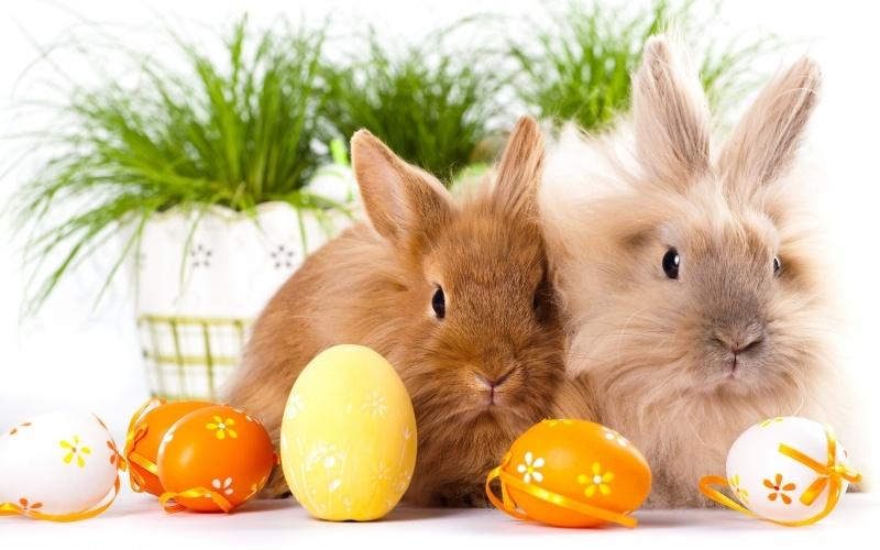 Lapins De Paques Et Oeufs Peints Easter Bunny Fond Ecran Hd