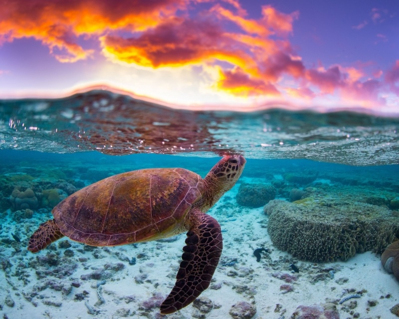 Tortue Marine Lagon Photo Fond Ecran Fond Ecran Hd