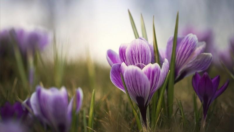 Violet Fond Ecran Hd
