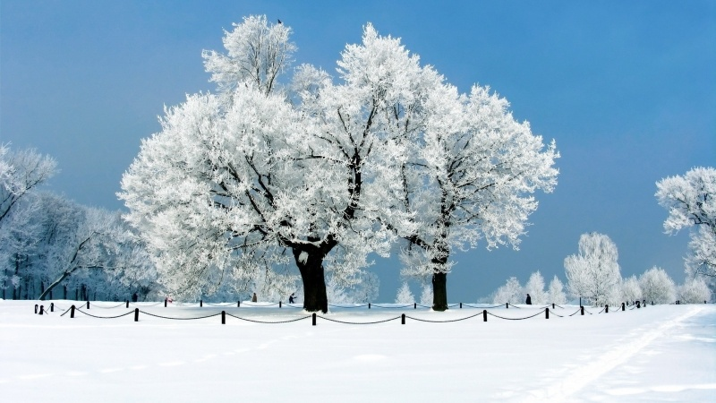 wallpaper arbre blanc gel neige parc