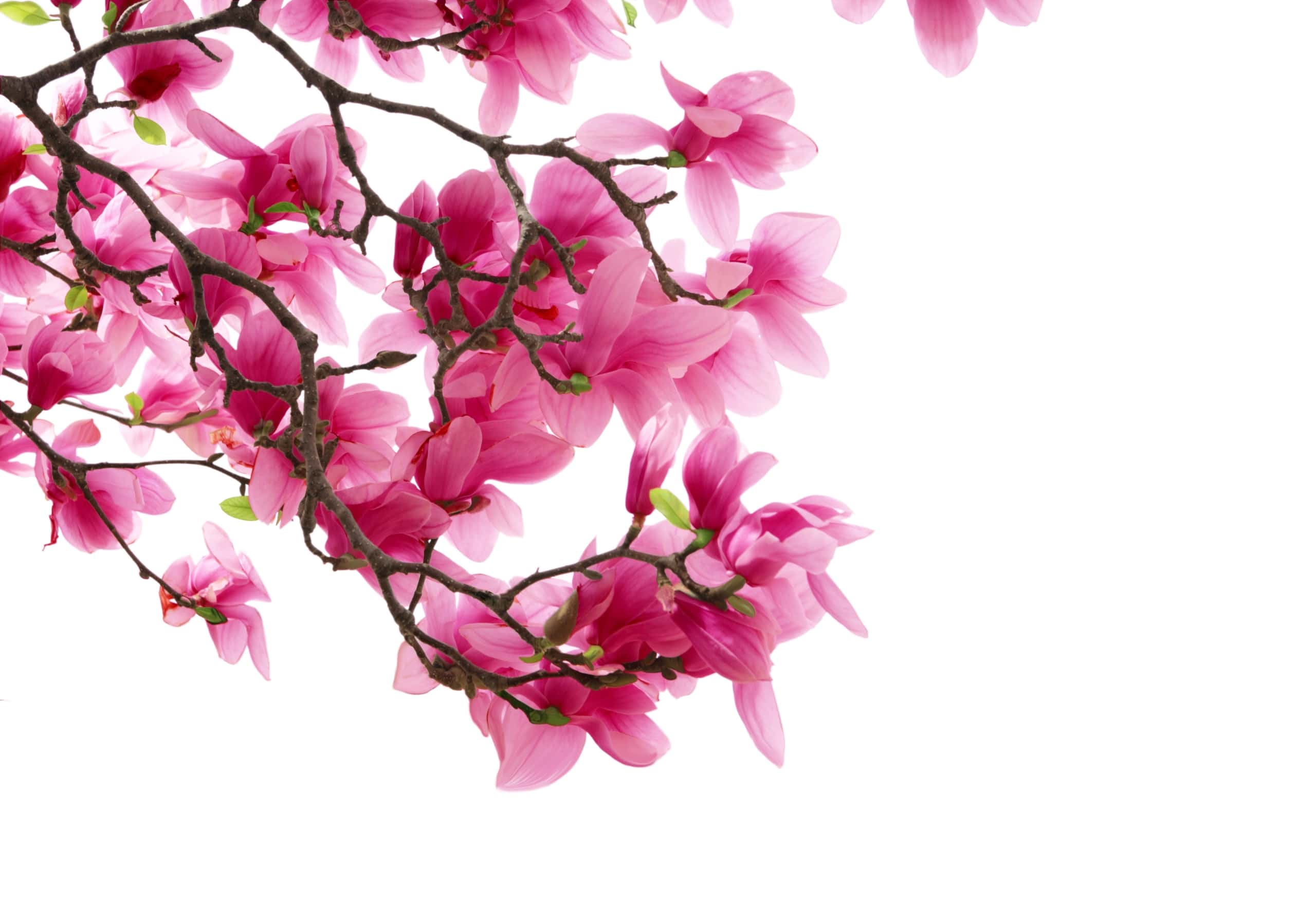Fleur De Tournesol Fond Ecran Hd
